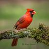 Monseigneur Cardinal