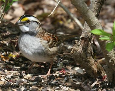 Backyard Birds on Easter Sunday