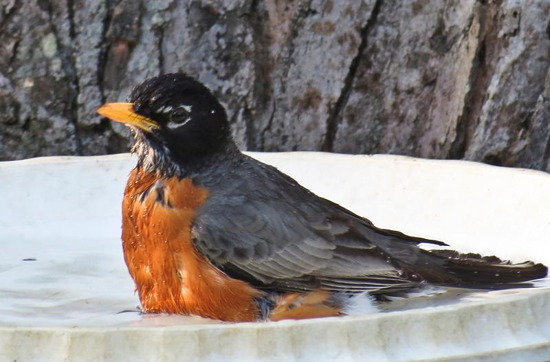 birds-159sm