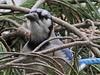 birds-516a