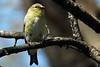 backyear birds-302a
