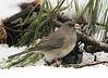 birds-505sm