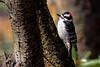 backyard birds-125a