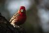 backyard birds-121