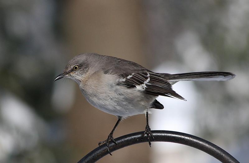 birds-101sm