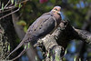 backyear birds-304a