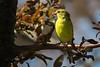 backyear birds-303a