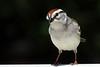 backyear birds-301a