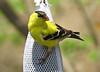 birds-157sm