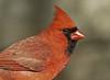 birds-103sm