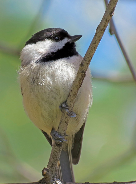 bird-501sm