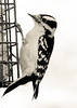 birds-112sm