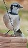 birds-105sm