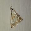 Very tiny moth.