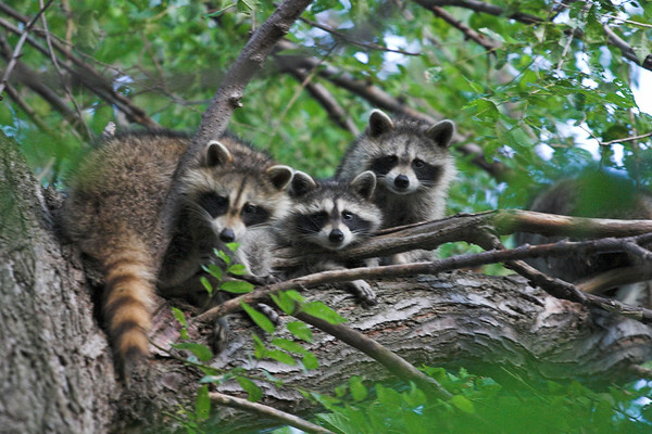 Backyard Creatures