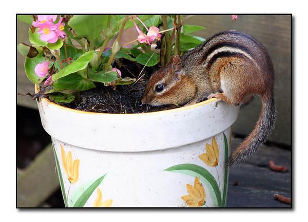 Digging in flower pots is fun (79848384)