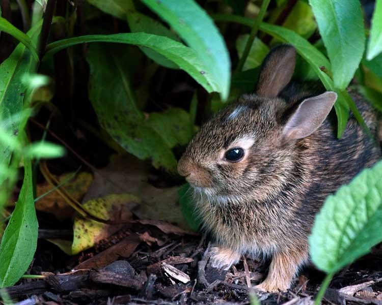 Micro Bunny (113735025)