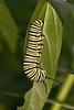 butterflys-100