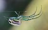 spider -101