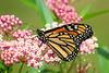 Monarch-101
