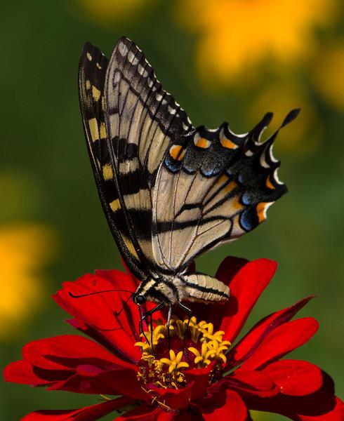 flower-220