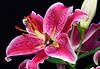 flower-201sm