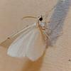 Lesser Maple Spanworm Moth, Speranza pustularia