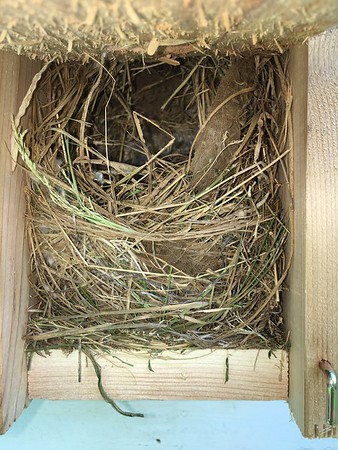 Backyard Nest