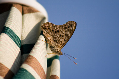 Butterfly on my patio umbrella. My new lens rocks!