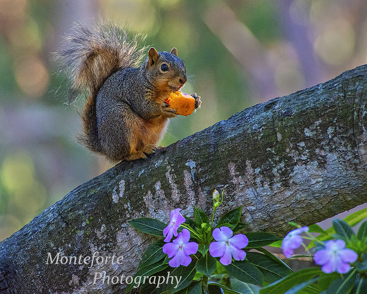 Squirrel with nectarine pit