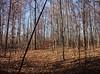 backyard woods 11_03 0014