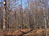backyard woods 11_03 0012