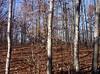 backyard woods 11_03 0016