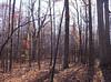 backyard woods 11_03 0015
