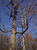 backyard woods 11_03 0013