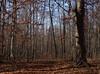 backyard woods 11_03 0010