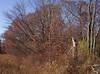 backyard woods 11_03 0004