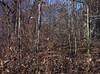 backyard woods 11_03 0007