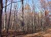 backyard woods 11_03 0009