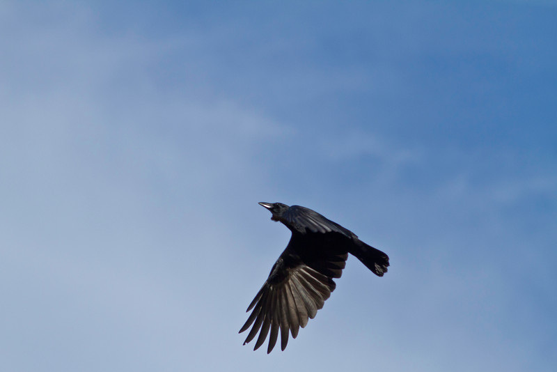 As the crow flies II