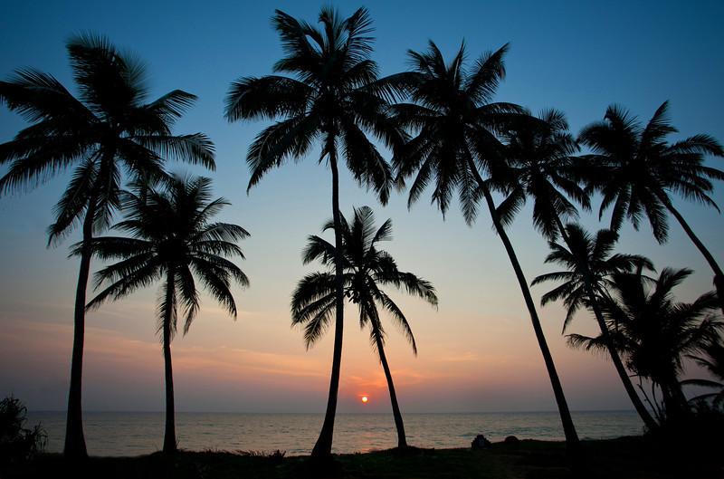 IMG_5458 Srilanka Palms PRINT