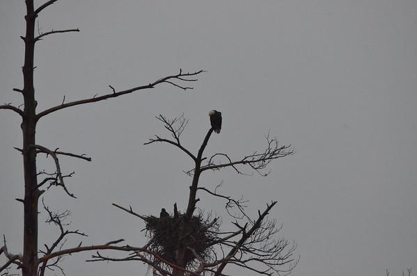Eagles 030115