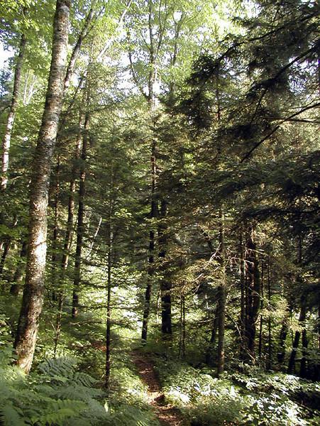 Heintooga Nature Trail <br /> Balsam Mtn Road <br /> GSMNP NC <br /> 6/17/07