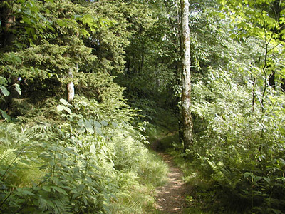 Heintooga Nature Trail 2<br /> Balsam Mtn Road <br /> GSMNP NC <br /> 6/17/07