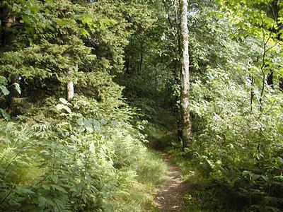 Heintooga Nature Trail 2 Balsam Mtn Road  GSMNP NC  6/17/07