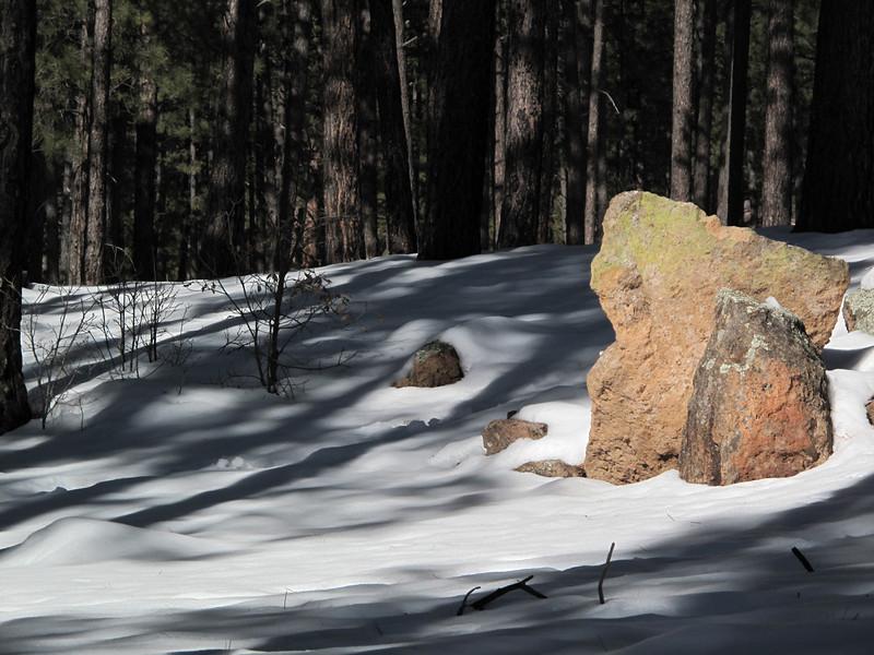 Sunlight on pretty rock