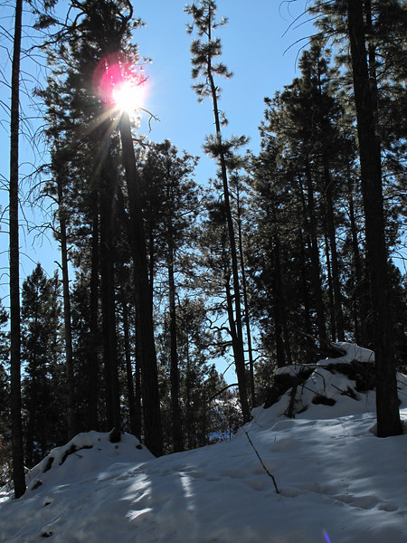 Sun shining behind a tree