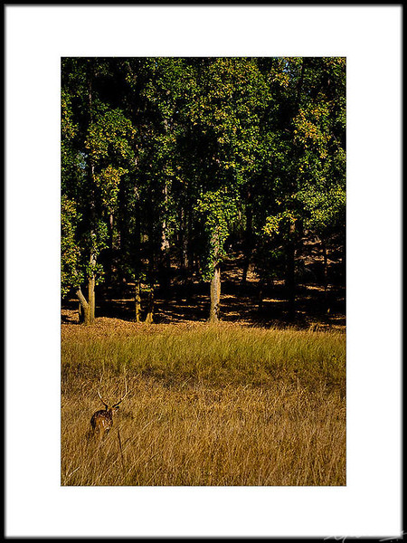 01: Wildlife and park, Bandhavgarh | Wildlife and park, Bandhavgarh 28 February 2010 NIKON D90; 70-300 mm f/4.5-5.6; Pattern; 1/320 sec at f/10; ISO-400;