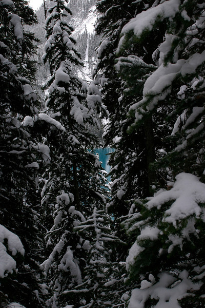 Glimpse of Blue through Trees