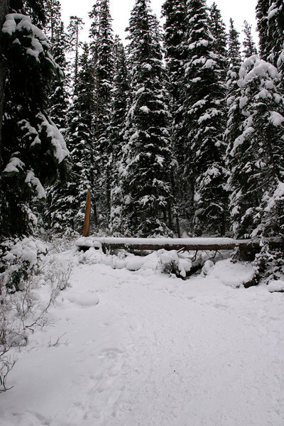 Trail to Lake Agnes